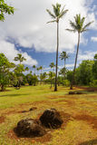 Rött smutsa med kokosnötTrees Royaltyfria Foton