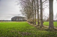 Landskap med rad av träd royaltyfri foto