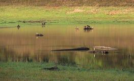 Landskap med reflexion floden Arkivfoto