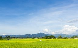 Landskap med risfält och blå himmel för frikänd Royaltyfri Fotografi