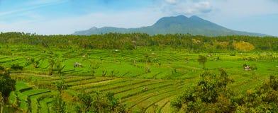 Landskap med risfält och den Agung vulkan bali indonesia Royaltyfri Bild