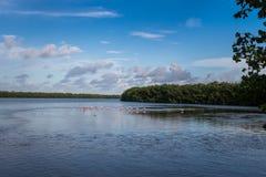 Landskap med Roseate Spoonbills, J n Ding Darling Nationa Arkivfoton