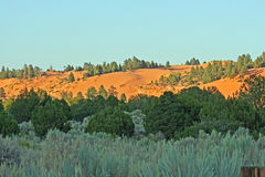 Landskap med sanddynen, trees och buskar arkivfoto