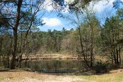 Landskap med sjön och skogen Arkivbilder