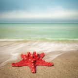 Landskap med sjöstjärnan på den sandiga stranden Royaltyfri Fotografi