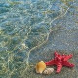 Landskap med sjöstjärnan på den sandiga stranden Arkivbild