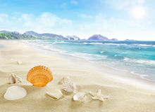 Landskap med skal på den sandiga stranden Royaltyfria Foton