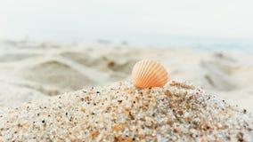 Landskap med skalet på stranden Royaltyfri Fotografi