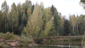 Landskap med skogen och floden arkivfilmer