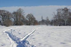 Landskap med snö och träd Arkivfoto