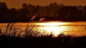 Landskap med soluppgång över sjön arkivfilmer