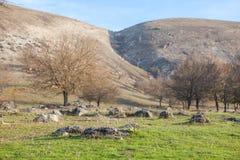 Landskap med stora stenar Royaltyfri Fotografi