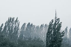 Landskap med träd i tungt sommarhäftigt regn royaltyfri foto