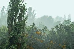 Landskap med träd i tungt sommarhäftigt regn royaltyfri bild