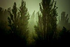 Landskap med träd i tungt sommarhäftigt regn royaltyfri fotografi