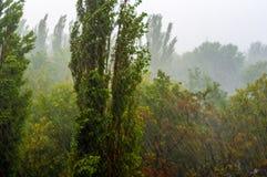 Landskap med träd i tungt sommarhäftigt regn royaltyfria bilder