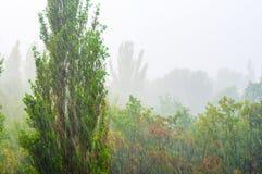 Landskap med träd i tungt sommarhäftigt regn royaltyfria foton