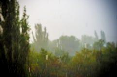 Landskap med träd i tungt sommarhäftigt regn fotografering för bildbyråer