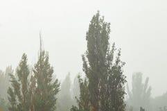 Landskap med träd i tungt sommarhäftigt regn arkivfoto
