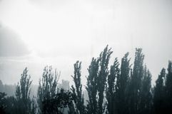 Landskap med träd i tungt sommarhäftigt regn arkivfoton
