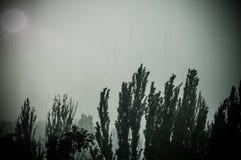 Landskap med träd i tungt sommarhäftigt regn arkivbild