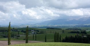 Landskap med träd och hus i Nya Zeeland arkivbilder