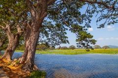Landskap med träd på sjön i djungeln Royaltyfri Bild
