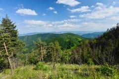 Landskap med träd, skogen, berg och dalar från Scarita-Belioara Arkivbilder