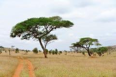 Landskap med trädet i Afrika Royaltyfri Fotografi