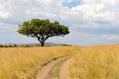 Landskap med trädet i Afrika Royaltyfria Bilder