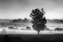 Landskap med trädet i misten i området av Koroneia sjön Royaltyfria Bilder