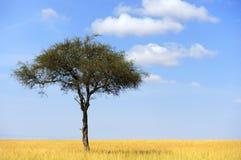 Landskap med trädet i Afrika Arkivbild