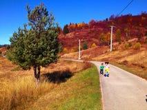 Landskap med treen Royaltyfria Foton
