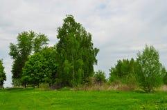 Landskap med Treesand grönt gräs Arkivfoton