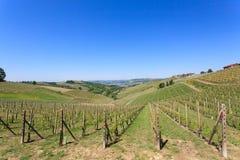 Landskap med vingårdar från Langhe, italienskt jordbruk Arkivbild