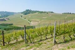 Landskap med vingårdar från Langhe, italienskt jordbruk Arkivbilder