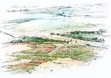Landskap med vingården Royaltyfri Foto