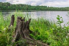 Landskap nära sjön arkivfoto