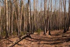 Landskap natur Fotografering för Bildbyråer