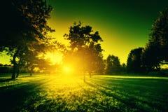 Landskap natur i grön signal Arkivfoto