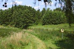 Landskap naturvårdsområde Unteres Peenetal (Vorpommern-Greifswald), söder av Greifswald, Tyskland Arkivbild