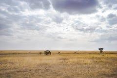 Landskap och djurliv i Tanzania - elefant Arkivfoto