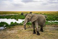 Landskap och djurliv i Tanzania - elefant Royaltyfria Foton