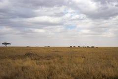 Landskap och djurliv i Tanzania - elefant Arkivfoton