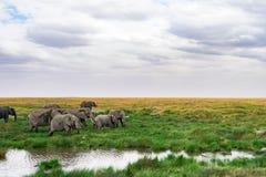 Landskap och djurliv i Tanzania - elefant Royaltyfria Bilder