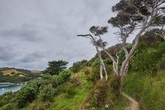 Landskap och landskap över land och vatten i Waiheke ö N Arkivbild