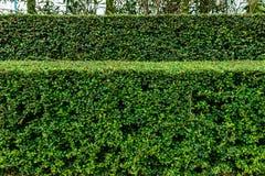 Landskap och manicured häck för en brunn av buskar Royaltyfri Fotografi