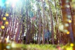 Landskap- och miljöbegrepp Fotografering för Bildbyråer