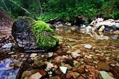 Landskap på bankerna av floden royaltyfri foto