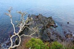 Landskap på den Batu Layar stranden Arkivbild